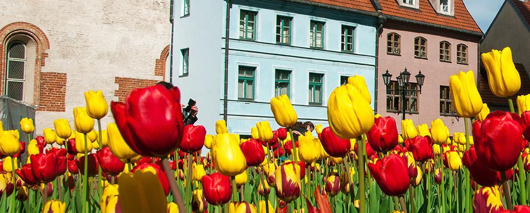 tullipaner og huse i riga rundrejse i baltikum