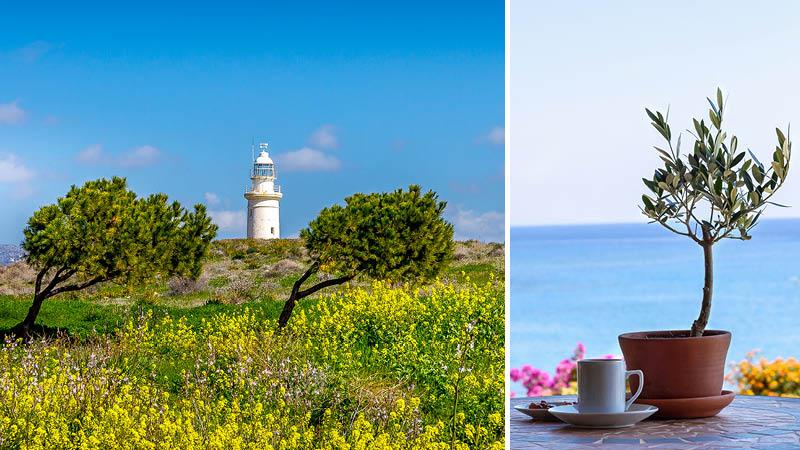 Kulturrejse til Cypern