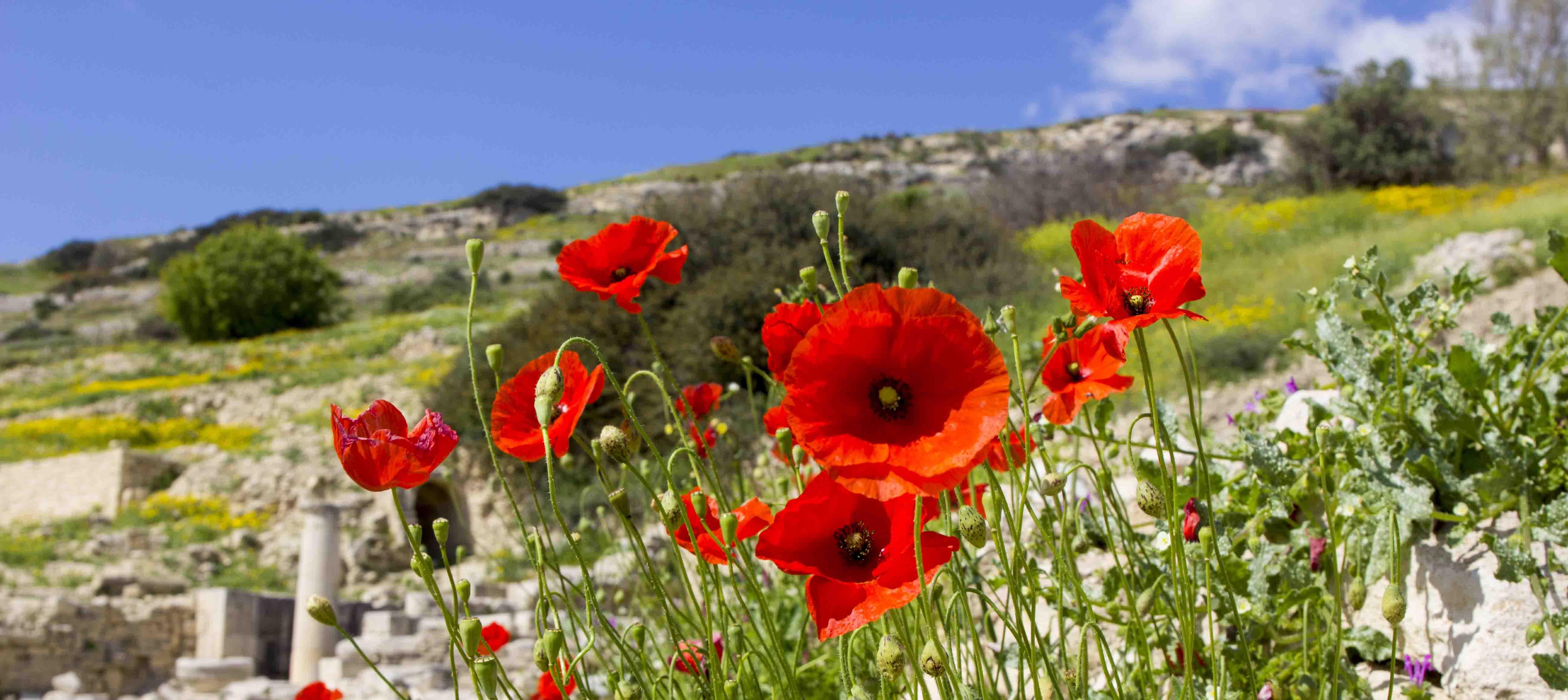 Rigt planteliv på Cypern i Middelhavet
