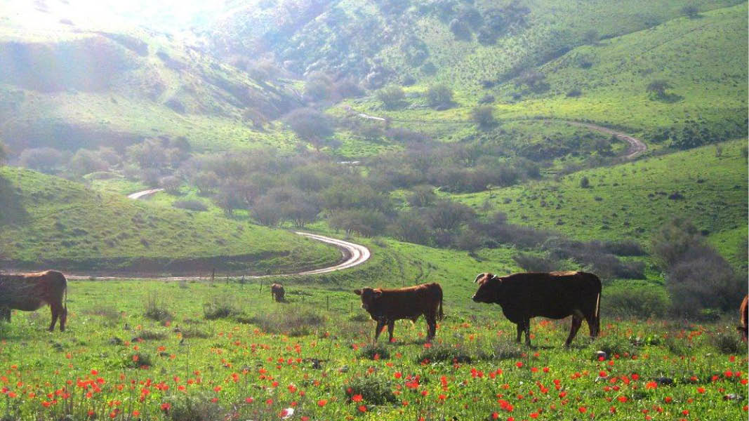 Natur ved Pearl of the Valley, Israel