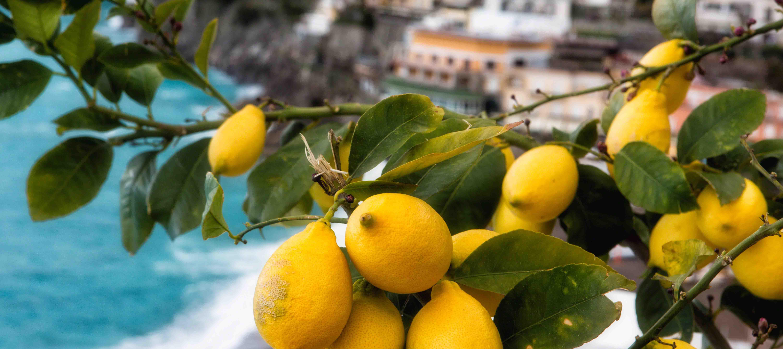 Citroner, Amalfikysten