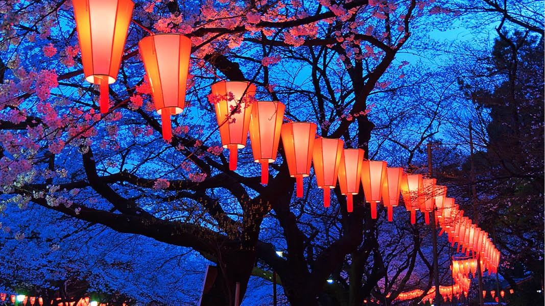 Japans Blomstrende Forår