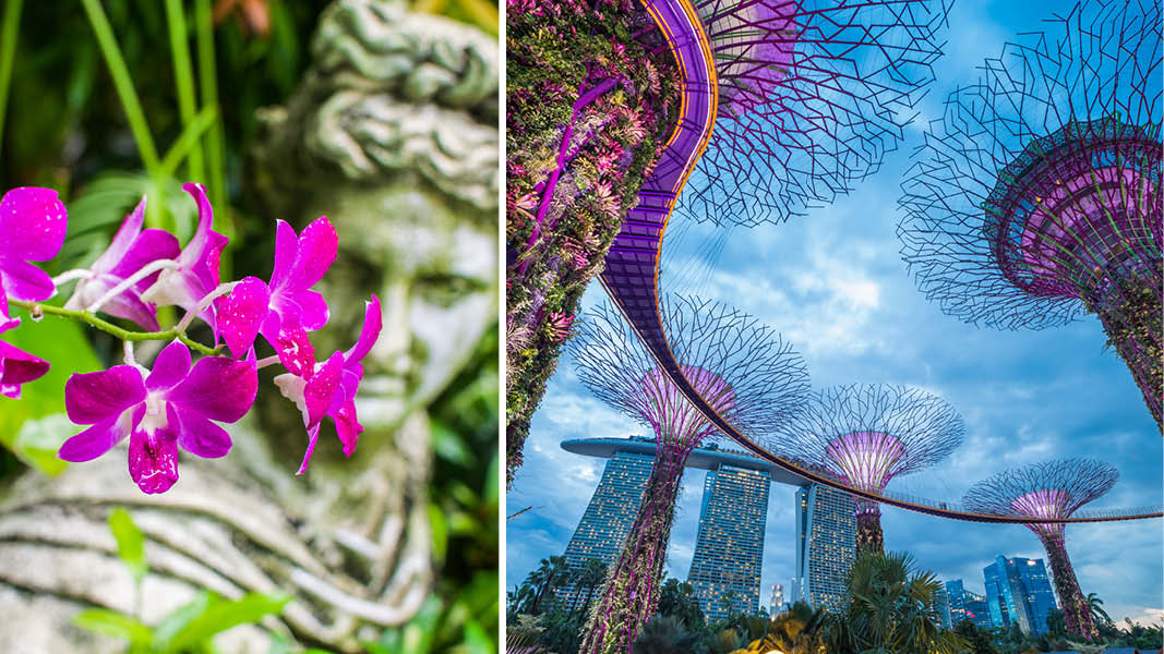 Botanisk have i Singapore og Garden by the bay i Singapore