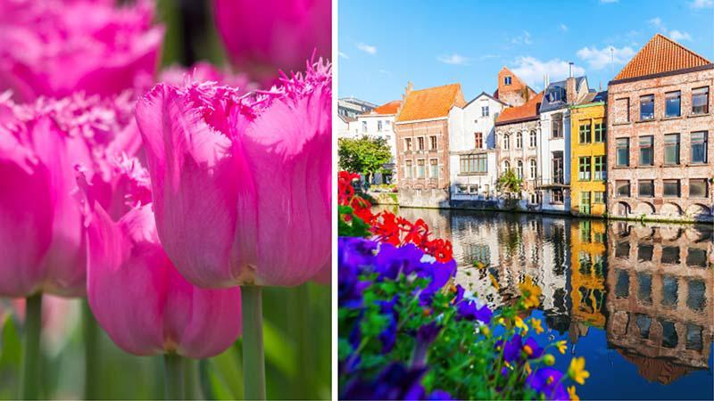 Tulipaner og Amsterdam