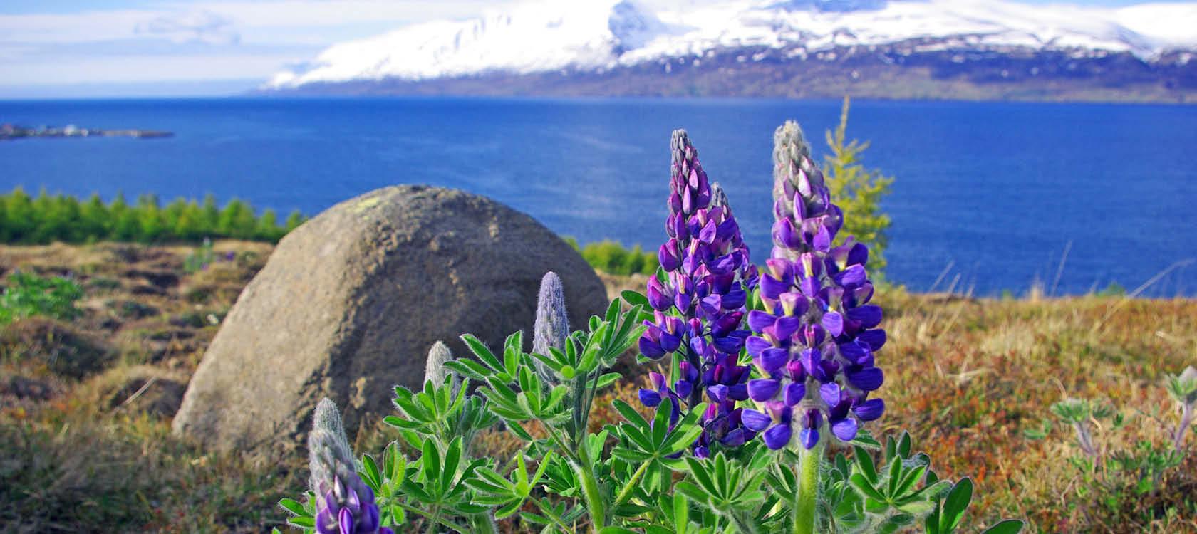 Krydstogt til Island, Irland og Skotland