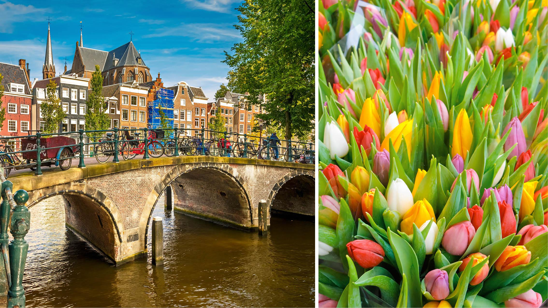 Amsterdam og tulipaner i fuld flor
