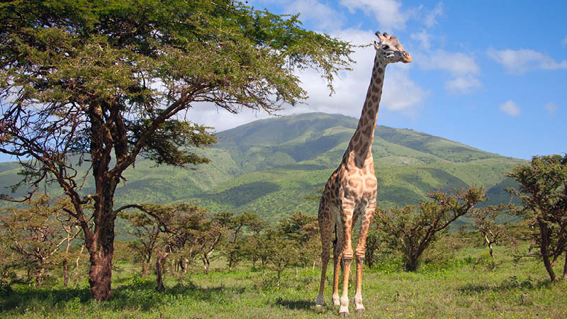 safari rejseformer
