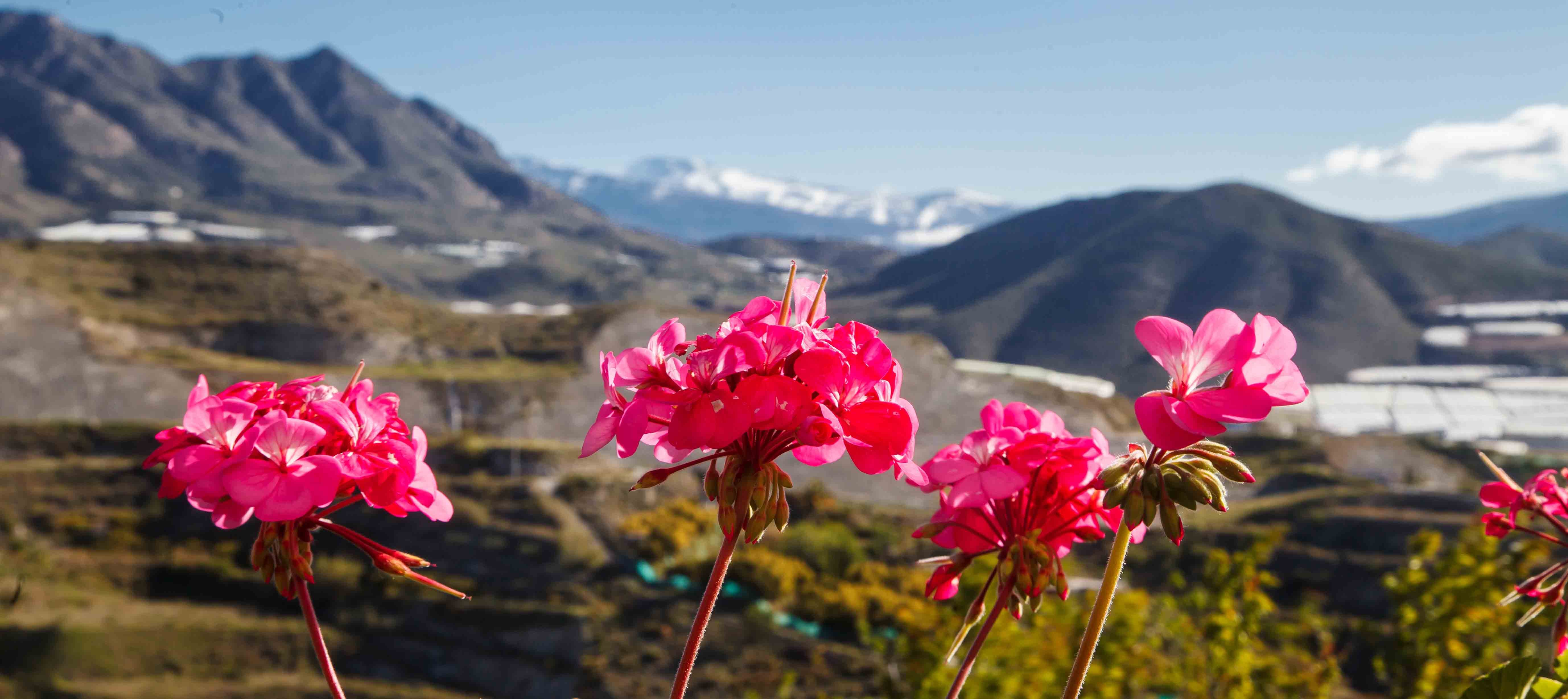Plantevækst i Salobrena-bjergene, Spanien