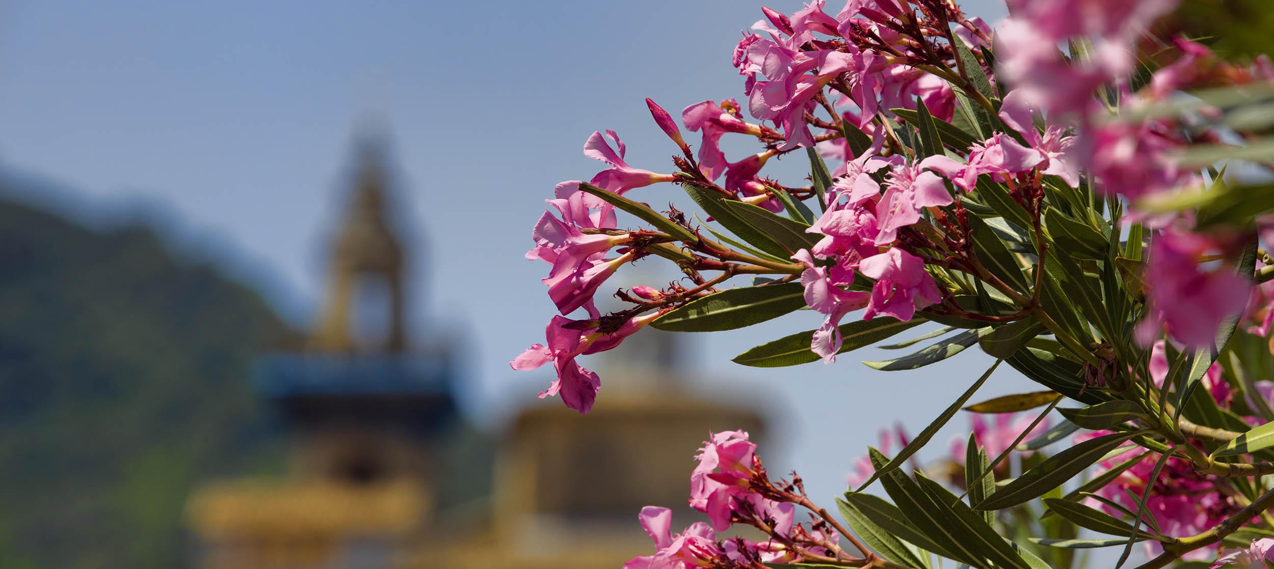 Blomsterpragt på Mallorca