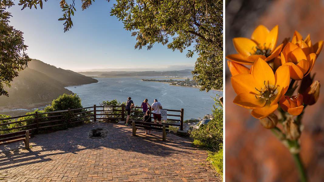 Udsigt og blomster, Sydafrika