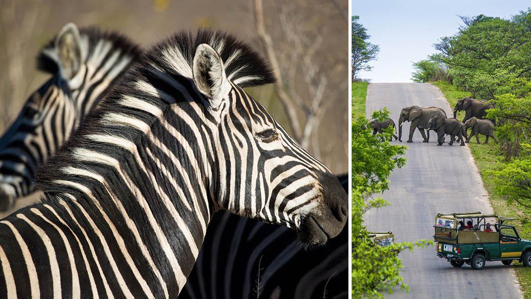 Zebraer og elefanter, safiri rundrejse Sydafrika