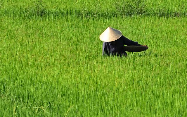 Fortryllende Vietnam