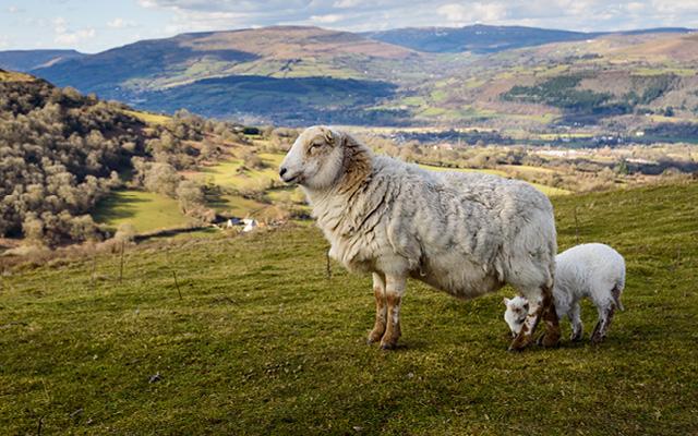 Vandreferie Wales